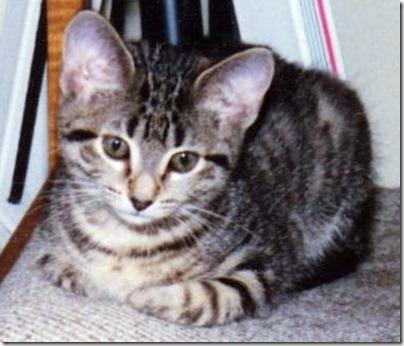 Kitten Nora