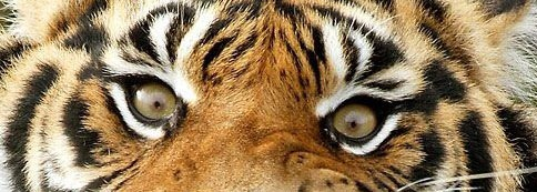 """life of pi better story 2018-6-15 life of pi critical essays  pi realizes, is """"life's only true opponent,"""" and he holds back the fear with his faith,  """"which is the better story,."""