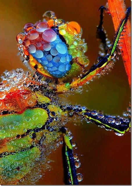 dragonfly-color-intense