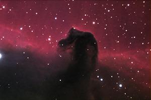 horse-1520