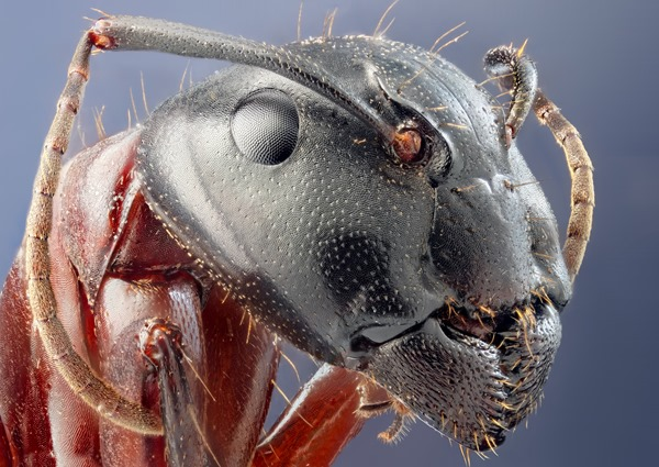 animals-ants-head-insects-microscopic-1018944-3000x2121