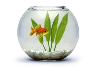 one-goldfish-in-a-bowl