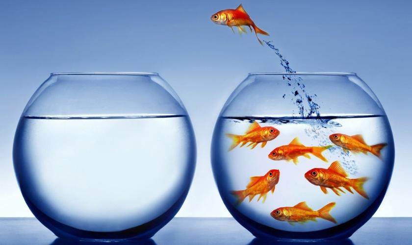 fish-leaving-bowl