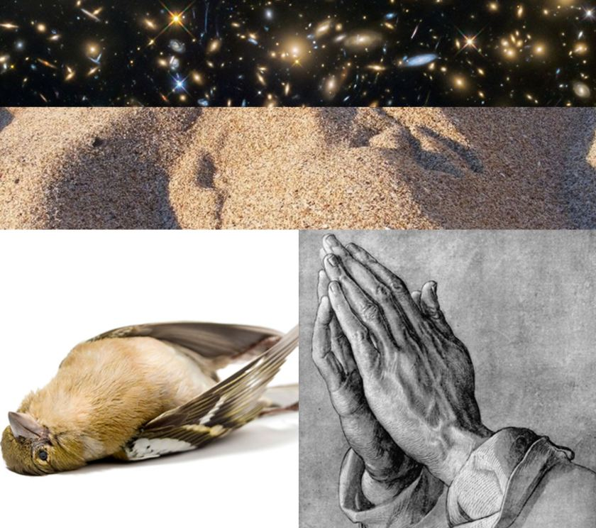 sparrows and prayers