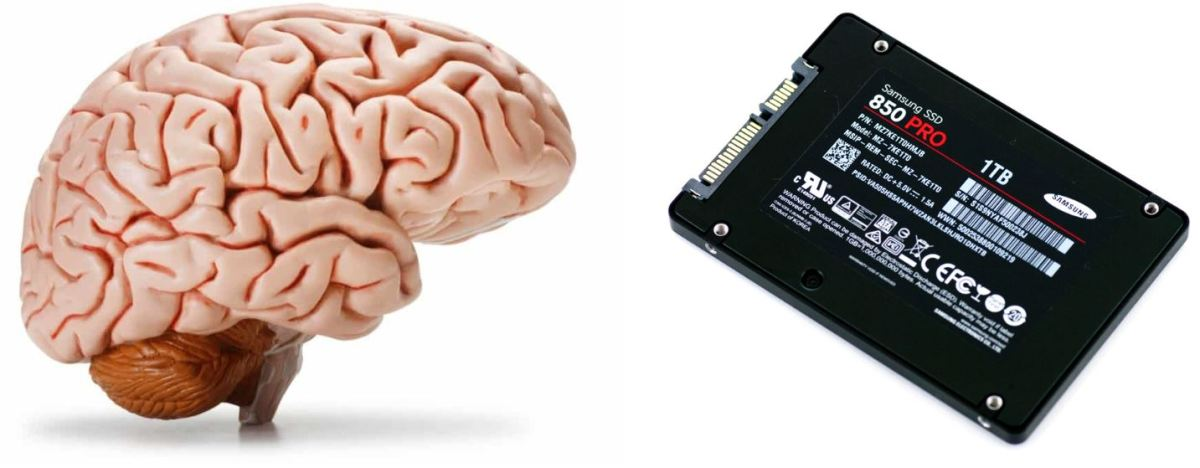What If Human Memory Worked Like A Computer's Hard Drive?